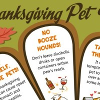 4 Thanksgiving Pet Tips