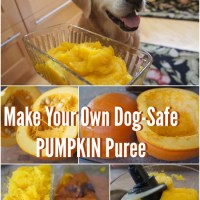 Make Your Own Dog-Safe Pumpkin Puree