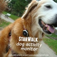 StarWalk: Dog Activity Monitor