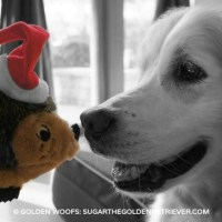 Nose to Nose with Santa Hedgehog Dog Toy