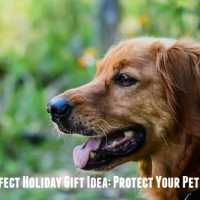 The Paw-fect Holiday Gift Idea: Protect Your Pet's Health