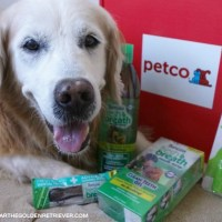Products for Your Pet's Oral Health
