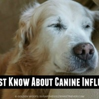 Canine Influenza Affecting Vet Visits