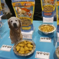 Lindy & Company Gourmet Pet Treats by Homeless Youth