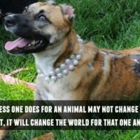 Susie's Hope | Be Kind to Animals Week