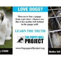Beware Of Puppy Mill Dogs #EndPuppyMills