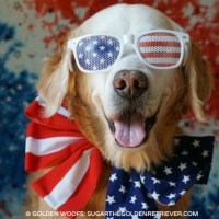 Patriotic Dog | Have a FUN Safe Fourth of July