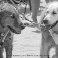 Sugar & Kalani 2015 Surf Dog Unleashed