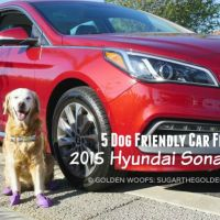 Dog Friendly Car Hyundai Sonata Sport #DriveHyundai