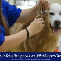 Get Your Dog Pampered at #PetSmartGrooming