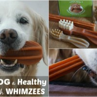 Give Your Dog A Healthy Smile with Whimzees