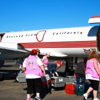 Holiday Airlift for Over 1000 Shelter Pets