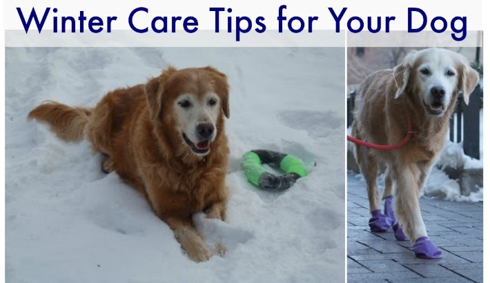Infographic: Winter Care Tips For Your Dog