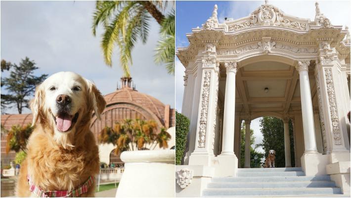 Sugar Visits Dog Friendly Balboa Park
