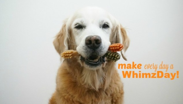 WHIMZEES Dental Chew #Woofs4TongueOut #PetDentalMonth