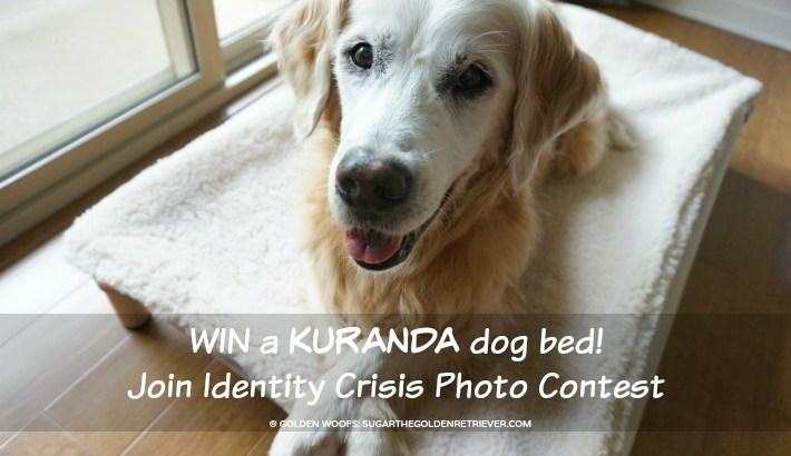 WIN Kuranda Dog Bed | Identity Crisis Photo Contest