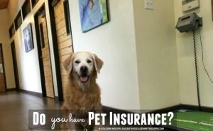 Do You Have Pet Insurance? #PetsBest