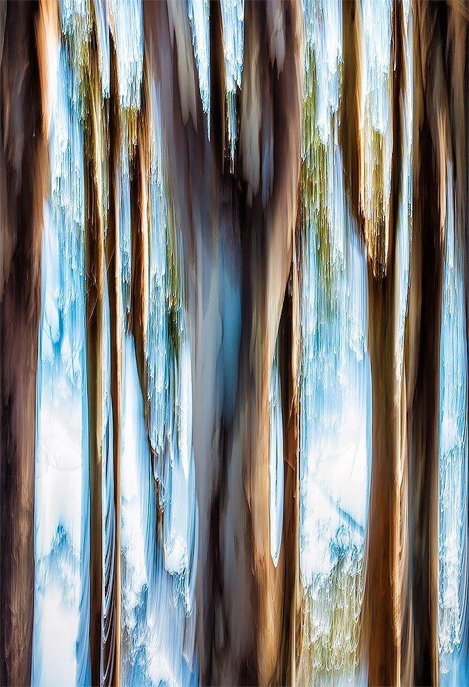 tree-lens-painting-9556