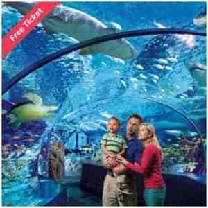 Ripleys Aquarium of the Smokies