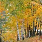 Sunnymede Farms autumn