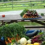 Sunnymede Farms fresh produce
