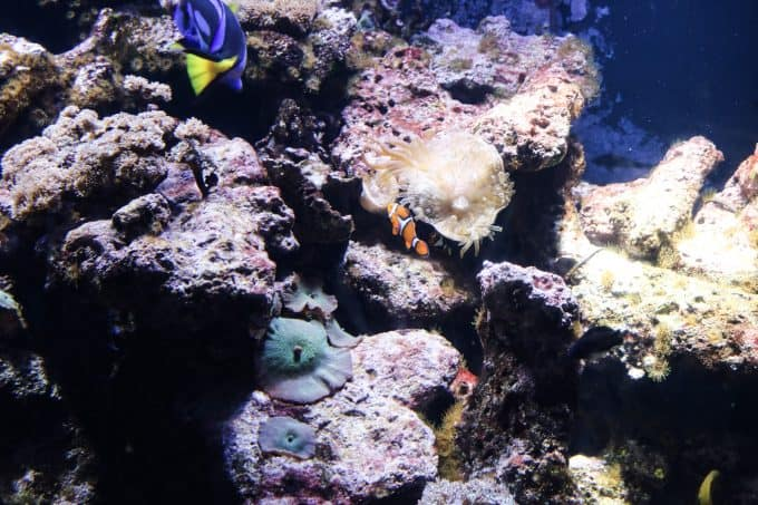 Visiting The Dallas World Aquarium With Kids Sunshine Momma