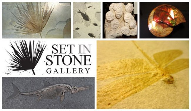 Set in Stone Gallery - Asia's Premier Fossil Exhibition