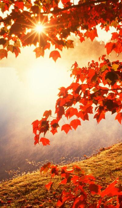 Good morning Autumn sunlight - HD wallpaper Wallpaper Download 600x1024