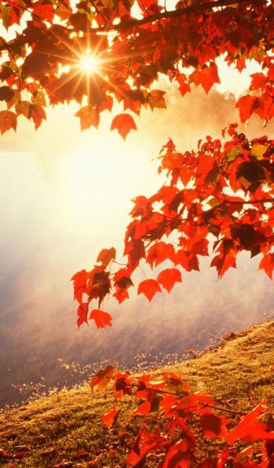 Good morning Autumn sunlight - HD wallpaper Wallpaper Download 600x1024