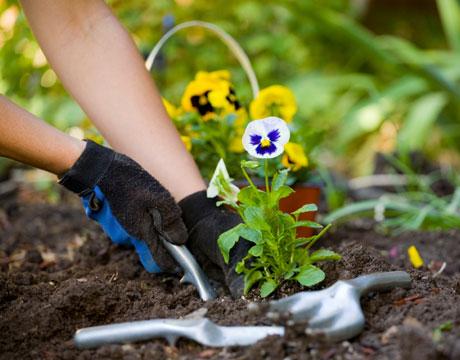 Green Ways To Summerfy Your Backyard Garden
