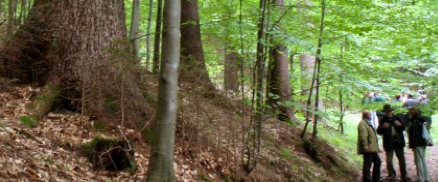 Permanent forests, Slovenia 2009