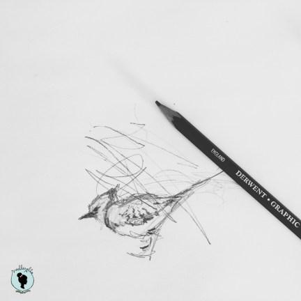 bird sketch with WM