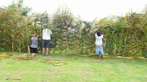 Palm Wall
