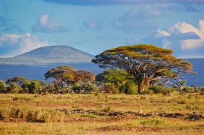 Across East African Plains