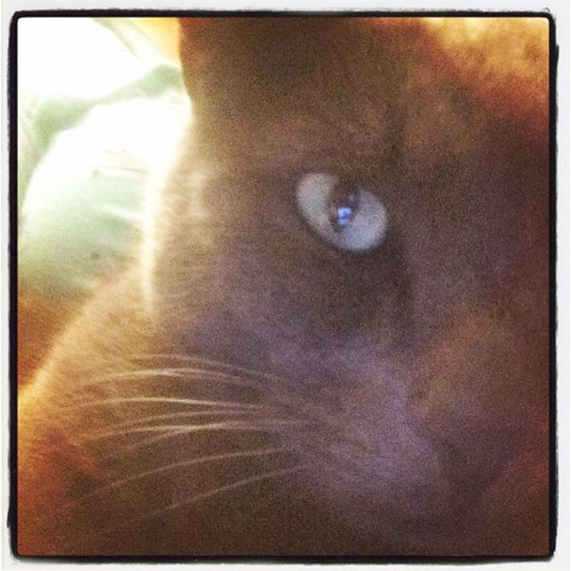 Cat #cats #cat #catsofinstagram #catstagram #graycat