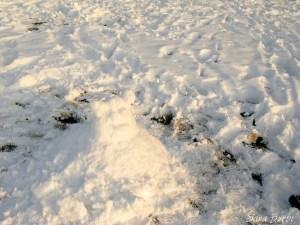SnöShrek