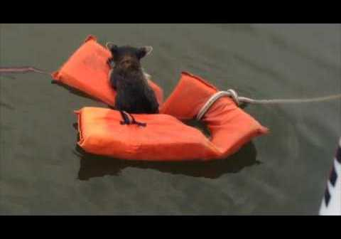 Maryland Boaters Resque Baby Racoon With a Life Jacket