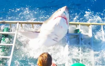 Diver survives being trapped inside cage with great white shark