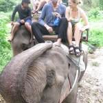 De spinnville på elefantryggen i Thailands jungel