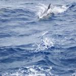Hurra! Delfiner! Hurra!