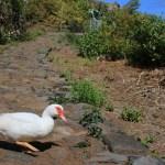 Walking Gomera (Donald)