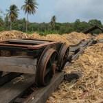 Åkeren av presset sukkerroer brukes som brensel til destilleringen av sukkerroejuicen.