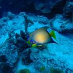 Liker du undervannsliv er Bonaire et must.
