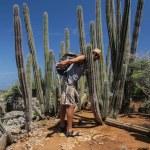 Inn i kaktusskogen.