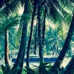 Spinnings leker gjemsel i palmeskogen