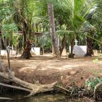 Gravplassen lå ved elvebredden, mellom palmetrærne.
