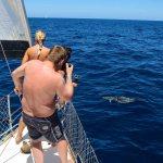Endelig kom delfinene vår vei!
