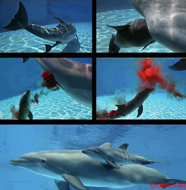 How Dolphins give birth
