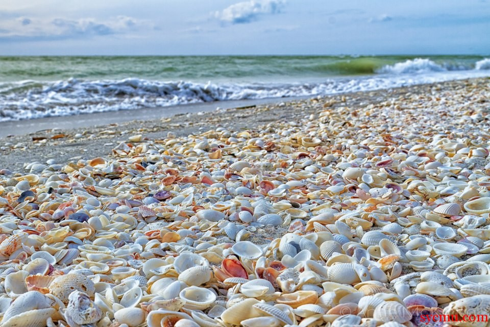 Seashells At Sanibel Island Florida