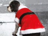 Christmas pets gifts and clothing